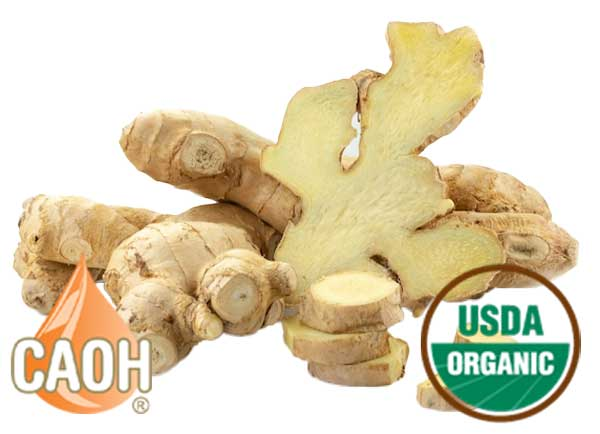 Organic Ginger Root Oil by CAOH.com