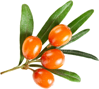Effects of seabuckthorn oil intake on vaginal atrophy in postmenopausal women: a randomized, double-blind, placebo-controlled study.