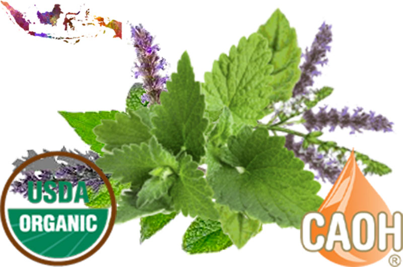 Organic Patchouli Oil by CAOH.com